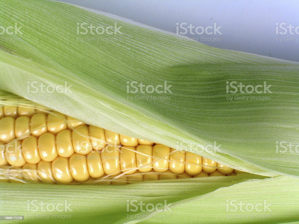 corn3 stock photo
