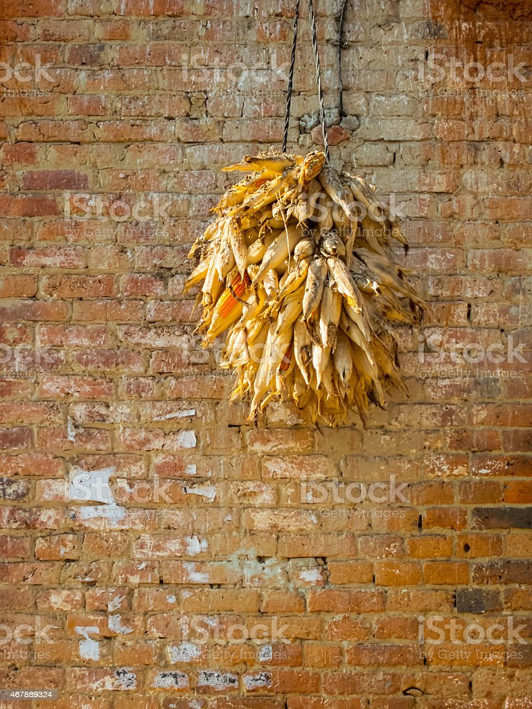 Corncobs drying stock photo