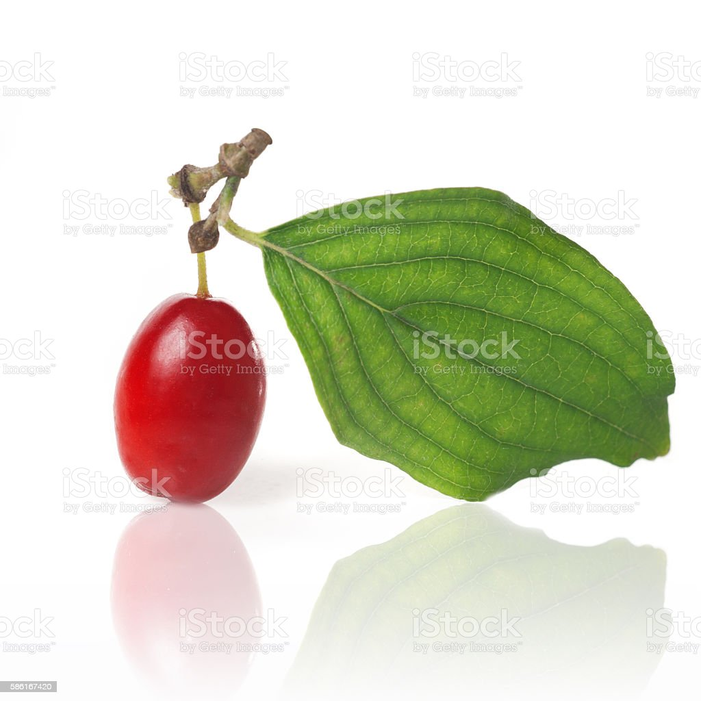 cornel with green leaf isolated on white stock photo