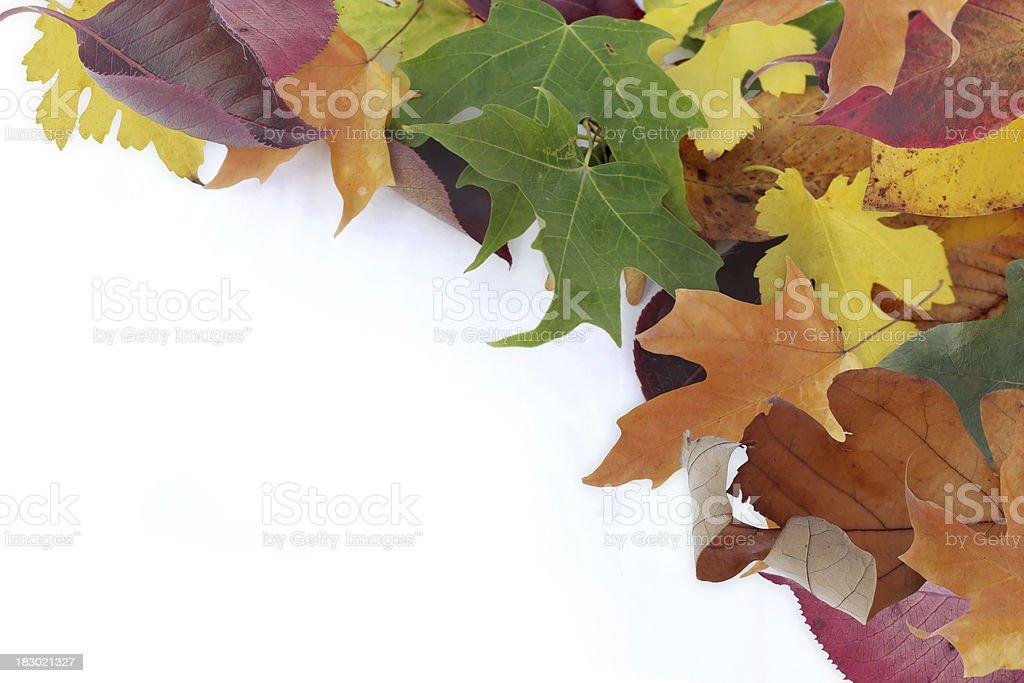 Corner Leaves royalty-free stock photo