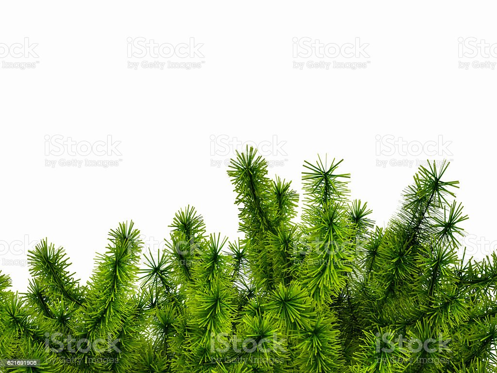 Corner made of green spruce branches. 3D illustration stock photo