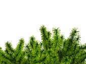 Corner made of green spruce branches. 3D illustration