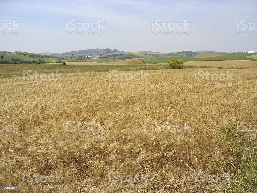 corner of a spanish field royalty-free stock photo