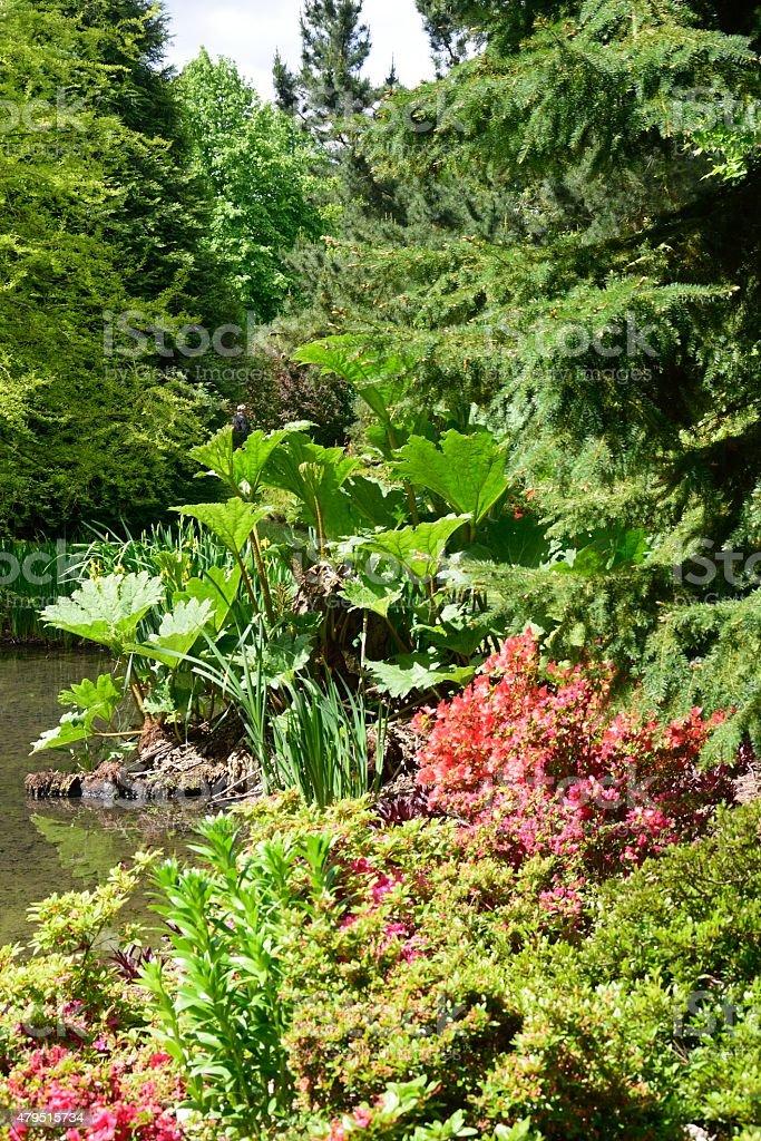 Corner of english garden with wild Rhubarb stock photo
