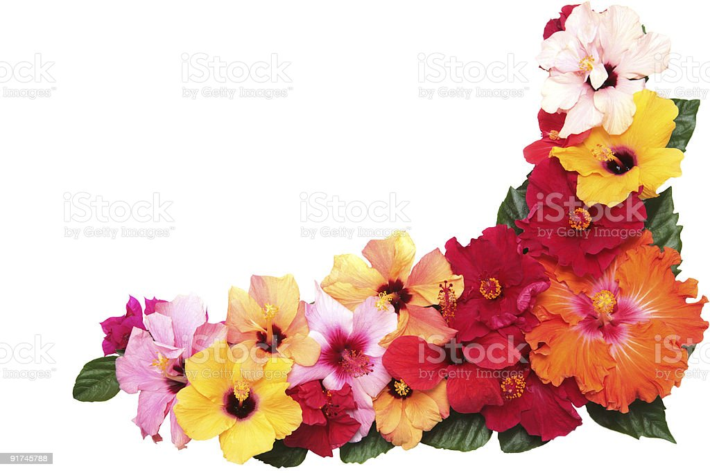 Corner with hibiscus flowers stock photo