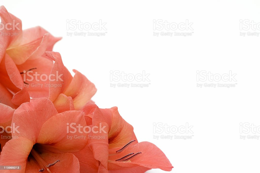 Corner  with Orange Gladiolus royalty-free stock photo