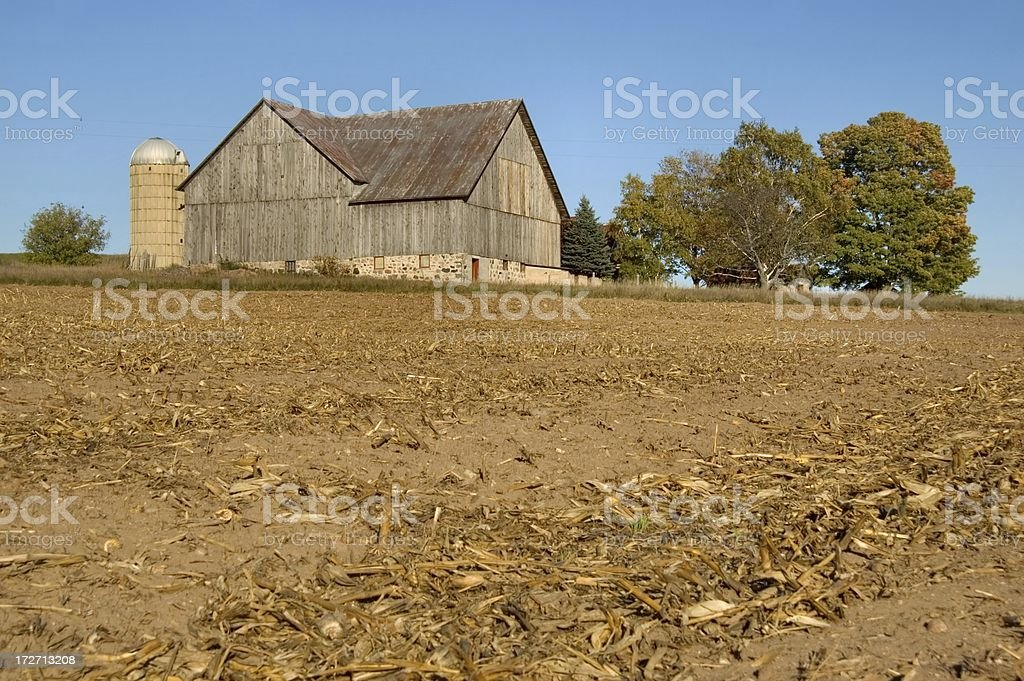 Cornfield after Harvest royalty-free stock photo