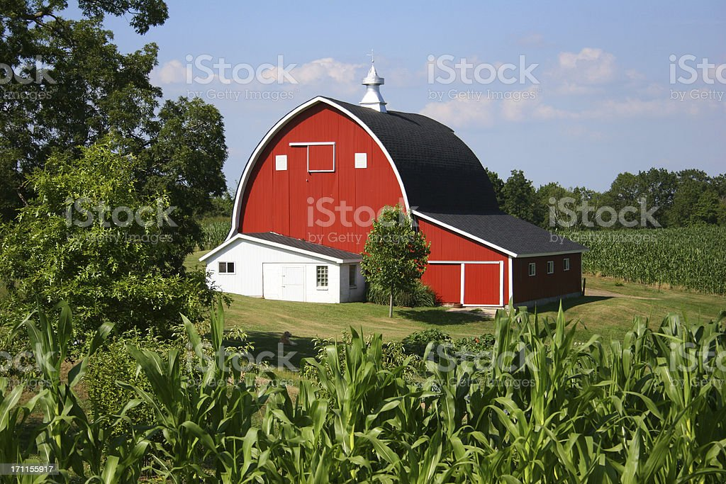 Cornfield and Barn royalty-free stock photo