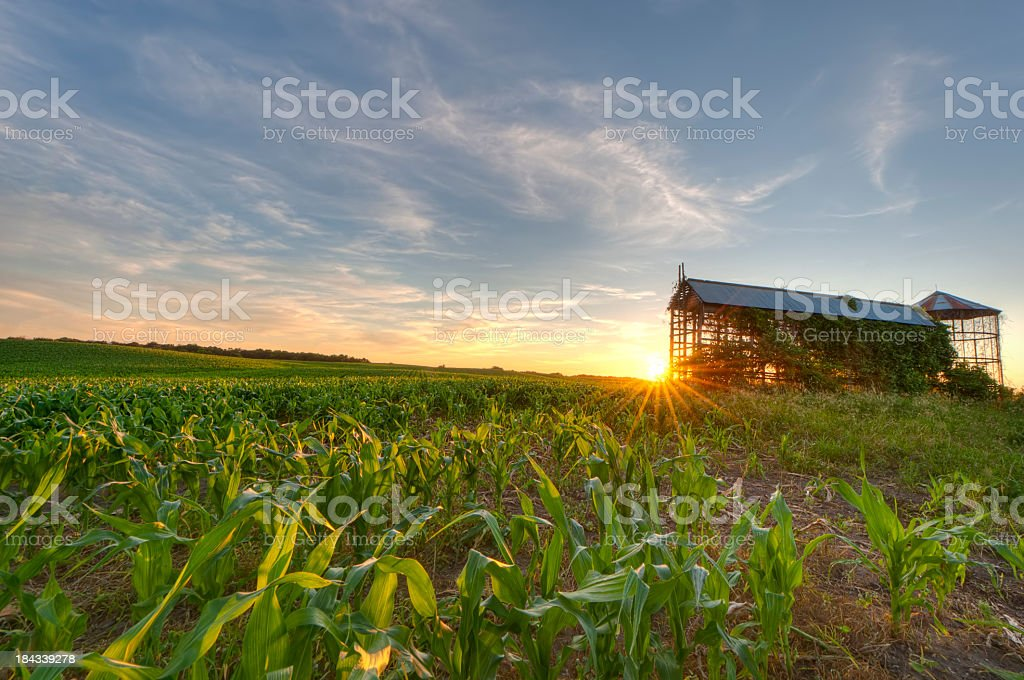 Cornfield and Grain bin at Sunset royalty-free stock photo