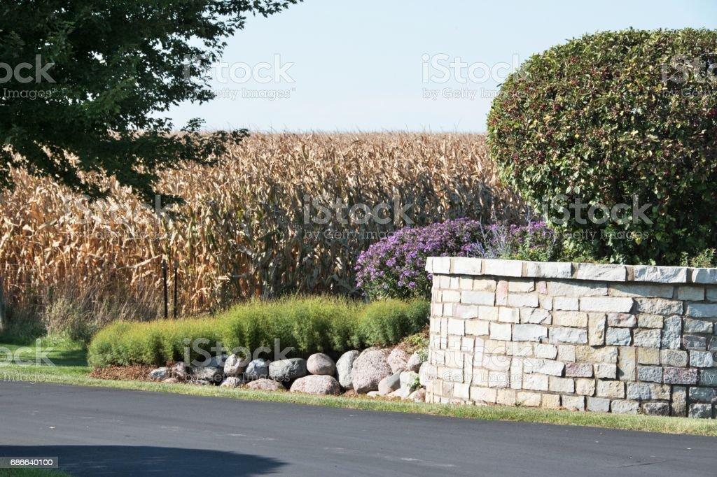 Cornfield and Stone Wall stock photo