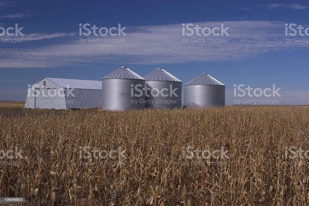 Cornfield and storage bins royalty-free stock photo