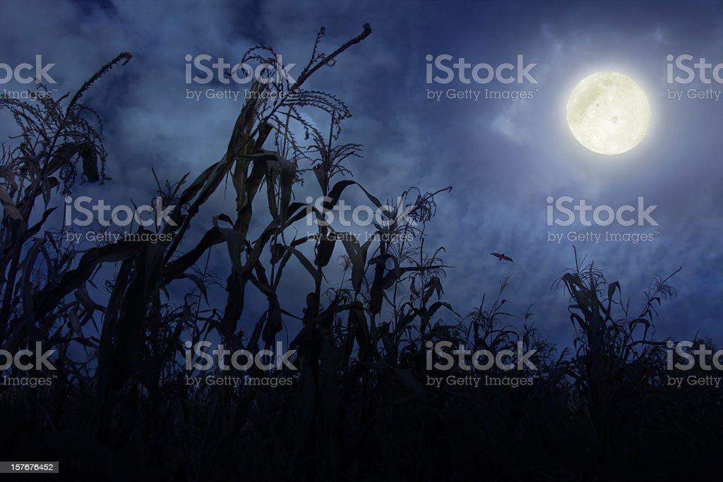 Cornfield at Night stock photo
