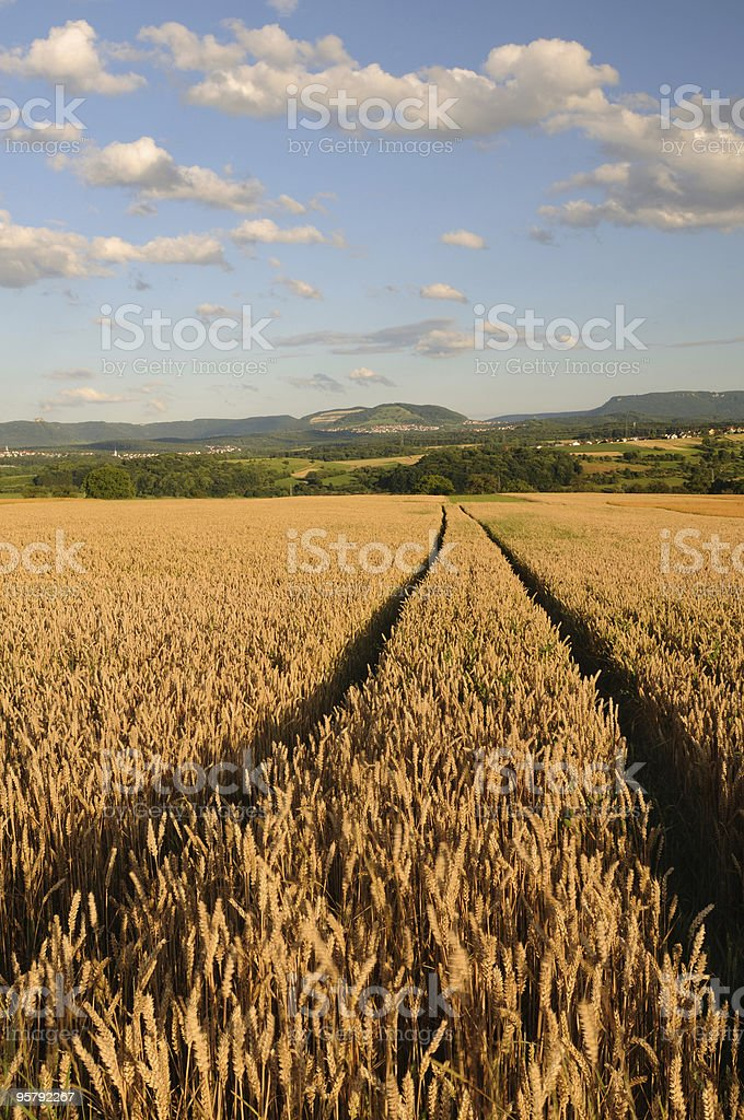 Cornfield in front of Swabian Mountains stock photo