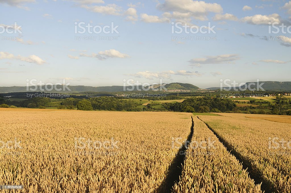 Cornfield in front of Swabian Mountains Summer stock photo