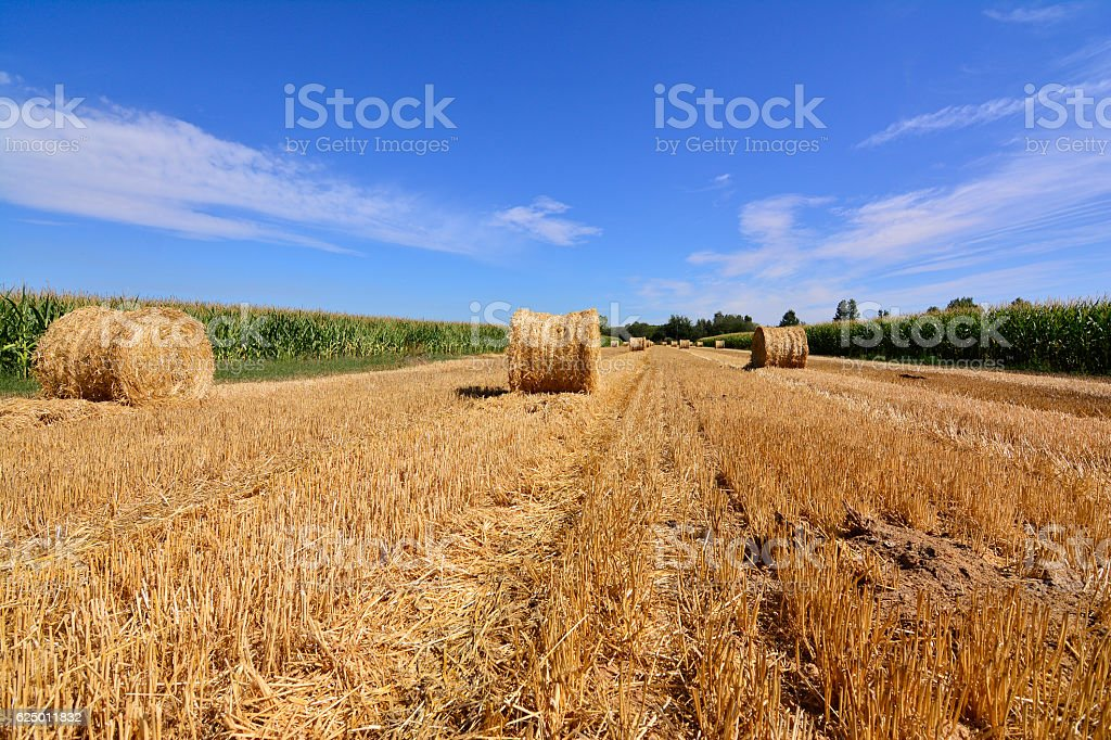 Cornfield Mowed con straw fardo stock photo