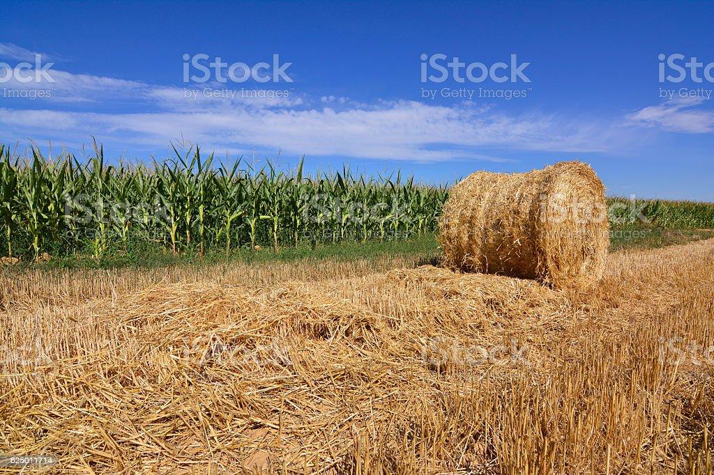 Cornfield Mowed con straw fardos stock photo