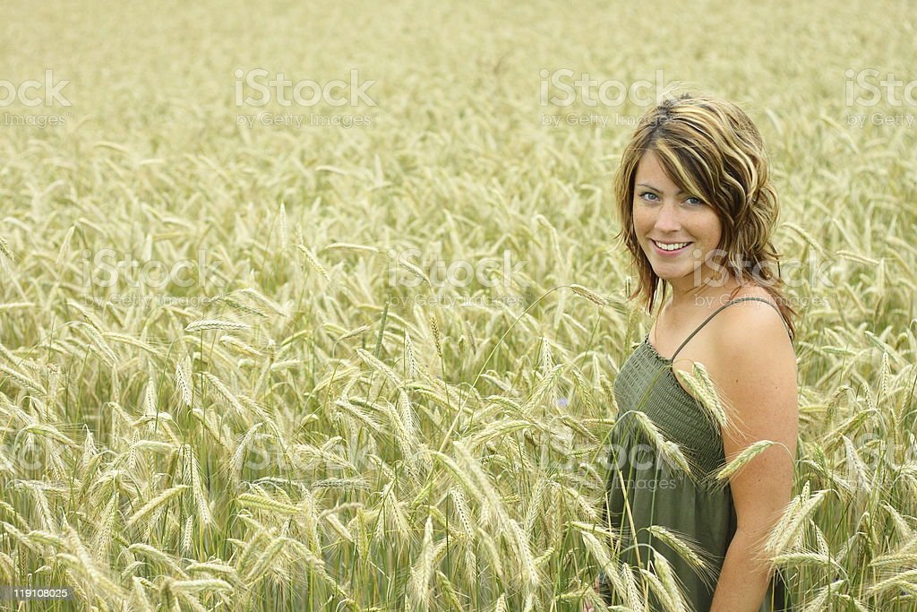 cornfield royalty-free stock photo