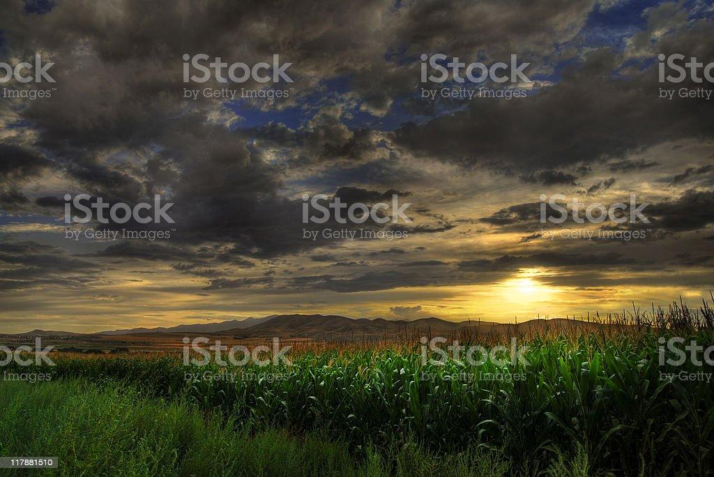 Cornfield Sunset royalty-free stock photo