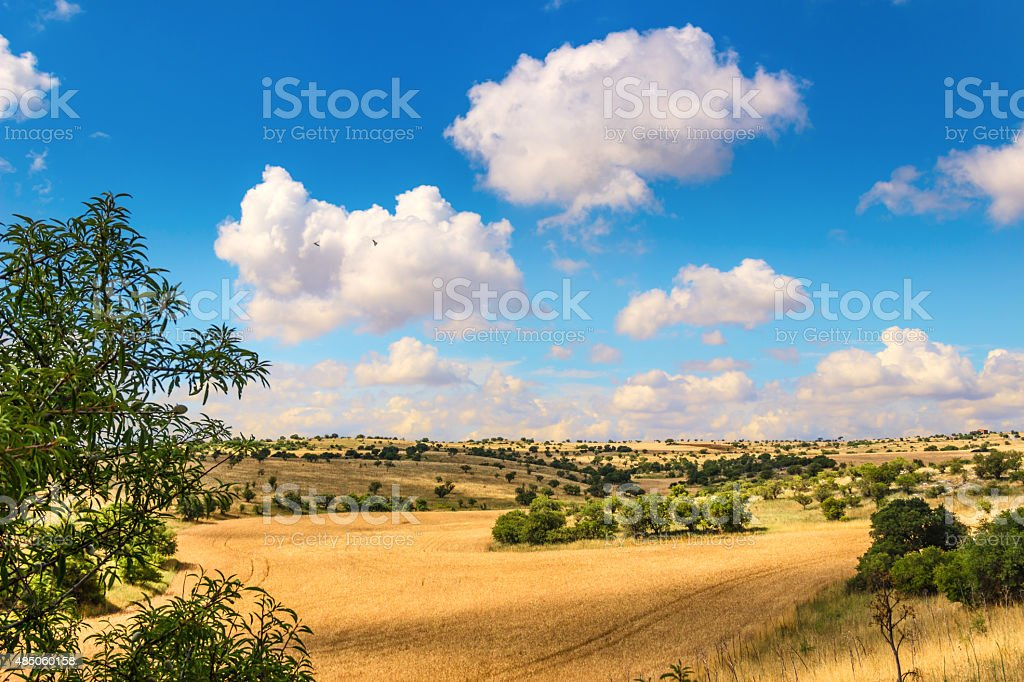 RURAL LANDSCAPE SUMMER. Cornfield topped by clouds..Apulia (ITALY) stock photo