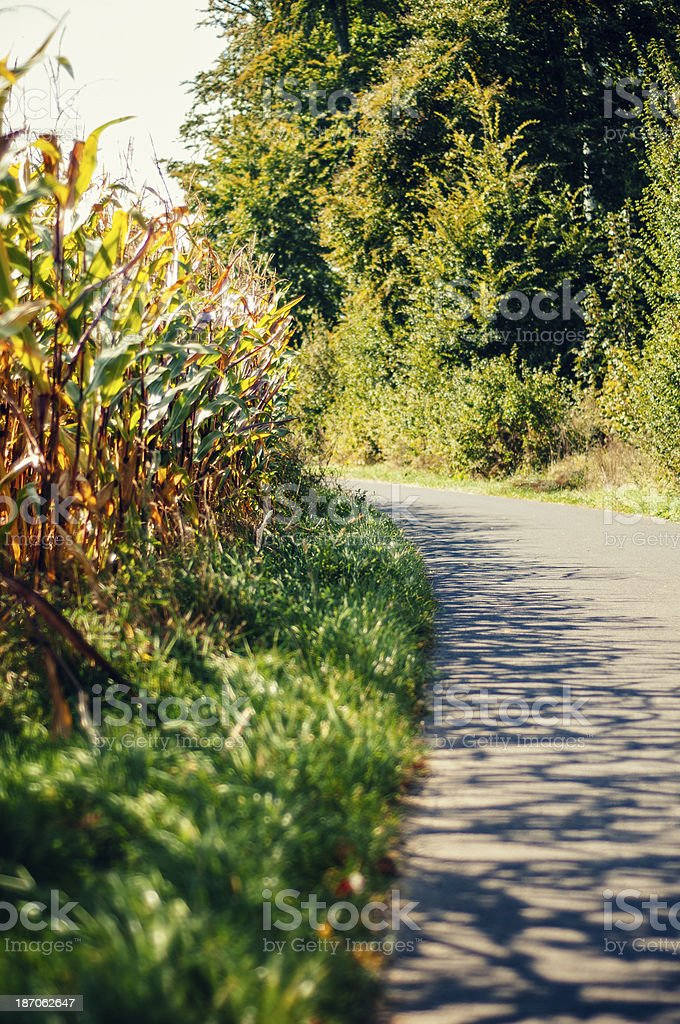 Cornfield with shady field road royalty-free stock photo