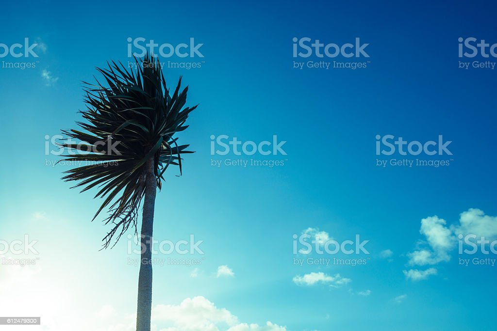 Cornish Palm tree against low early morning september sunshine. stock photo