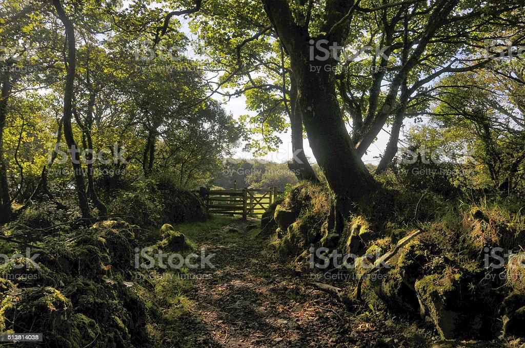 Cornish Summer stock photo