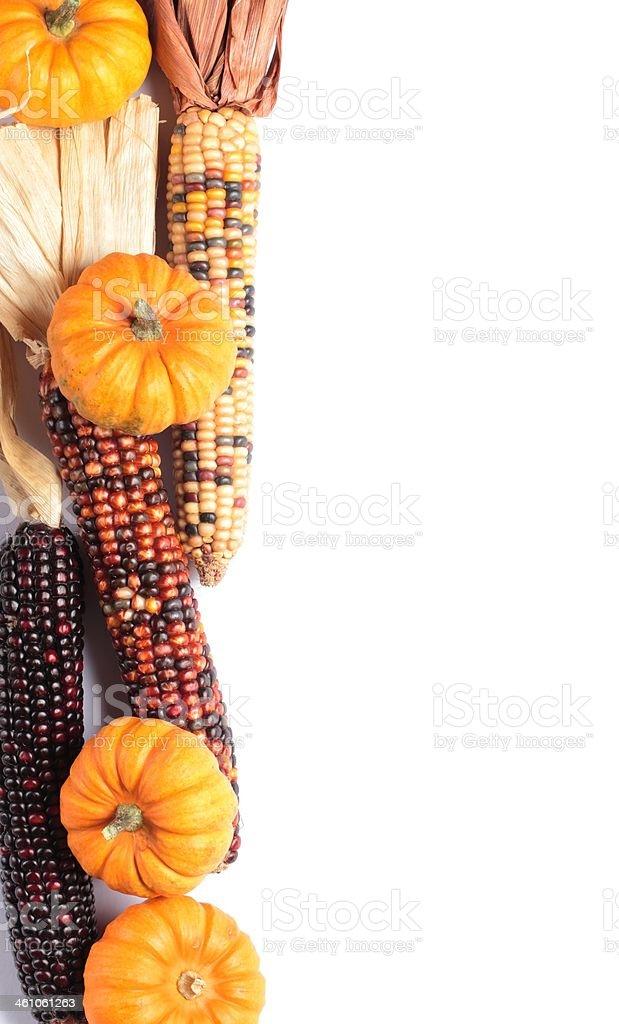 Corns and pumpkins royalty-free stock photo