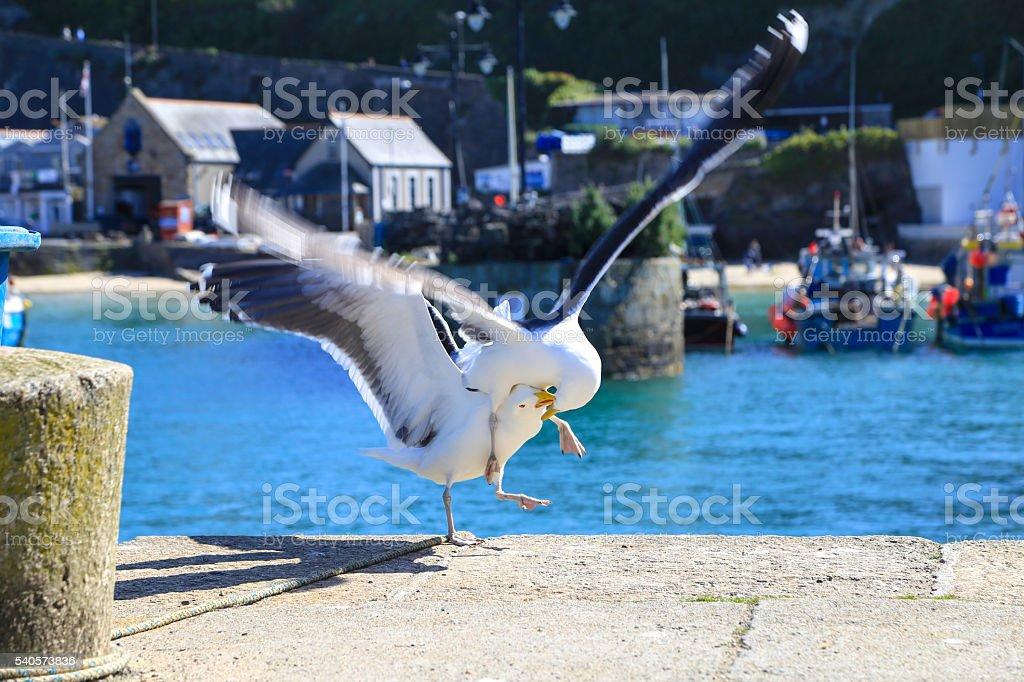 Cornwall, england, gull, sea, stock photo