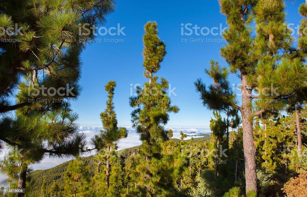 Corona Forestal in Tenerife stock photo