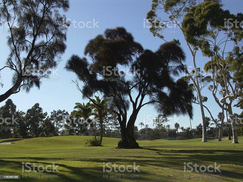 Coronado Island Golf Course royalty-free stock photo