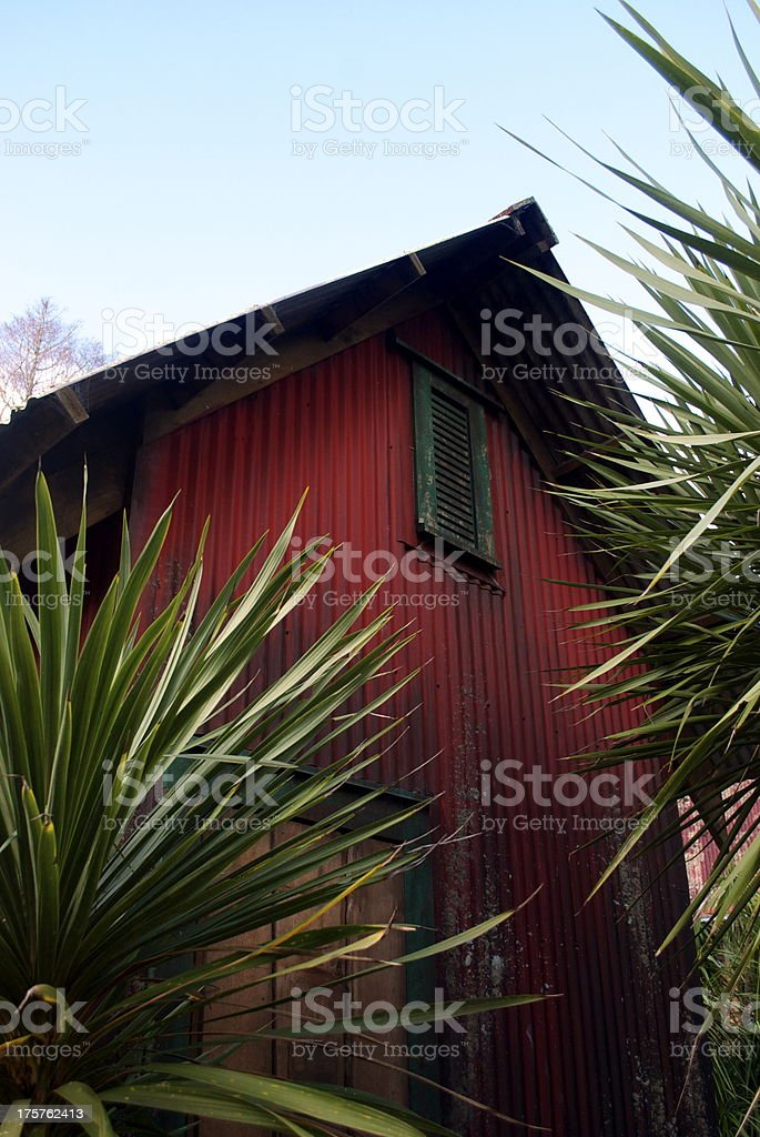 Corrugated Iron Building with Cabbage Trees royalty-free stock photo