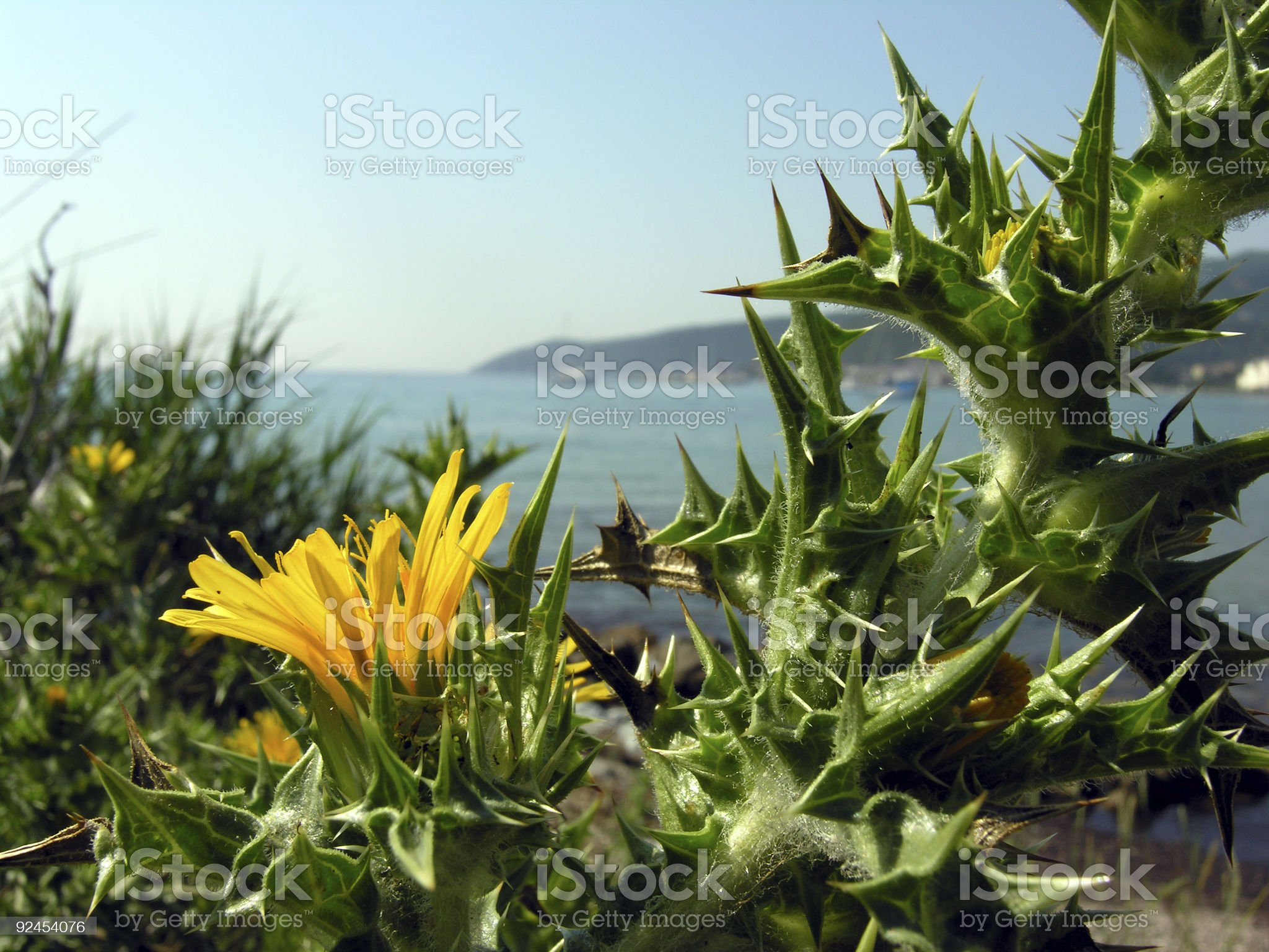 Corsica Beauty in Nature royalty-free stock photo