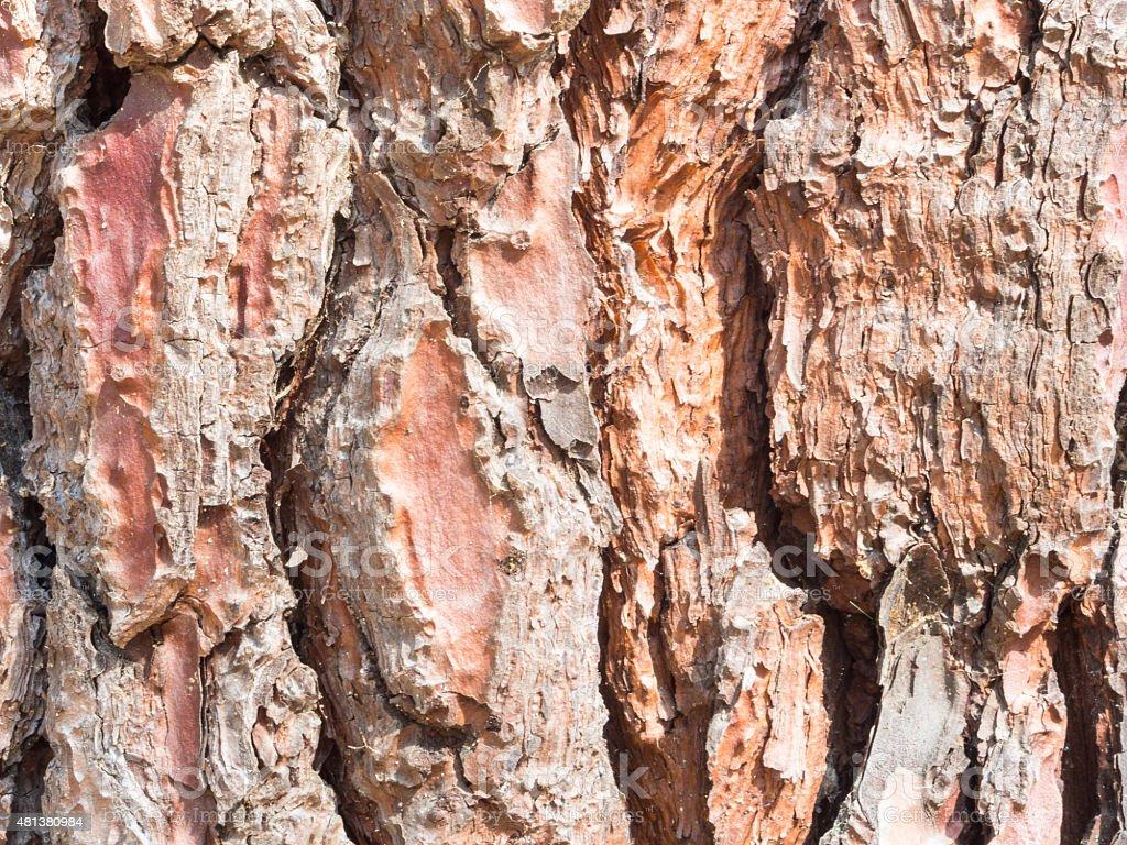 cortex pine close up stock photo