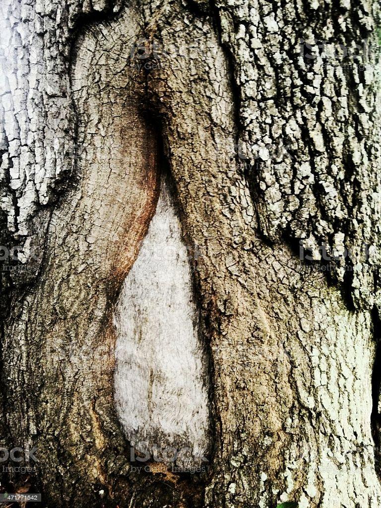 cortex tree trunk stock photo