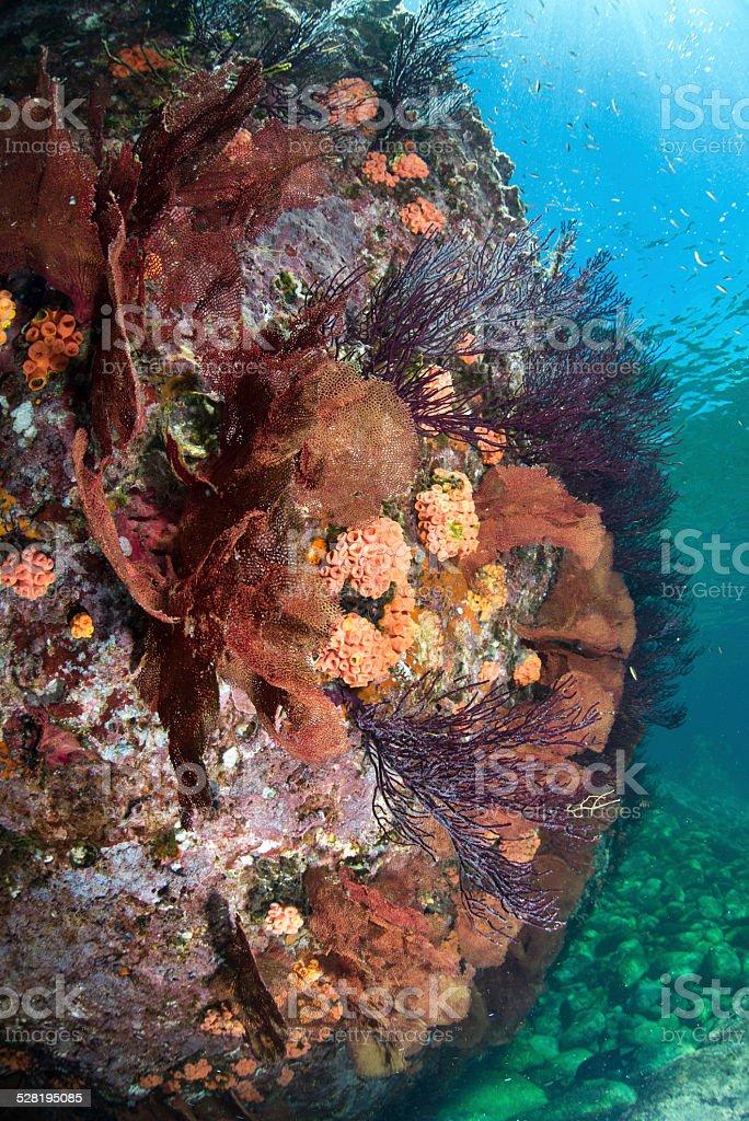 Cortez reef stock photo