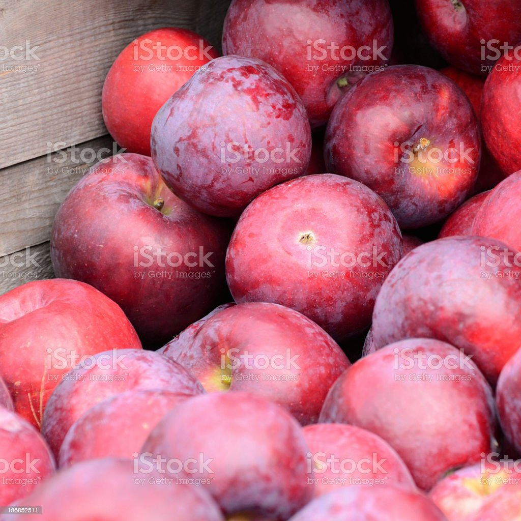 Cortland Apples (Square) stock photo