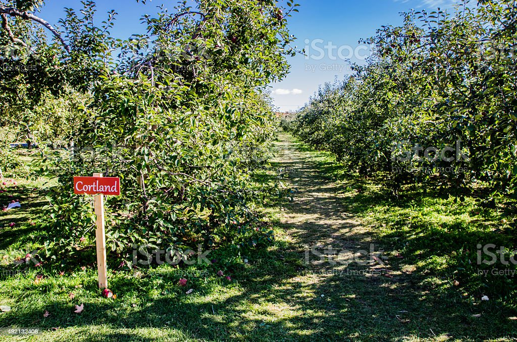Cortland's Orchard stock photo