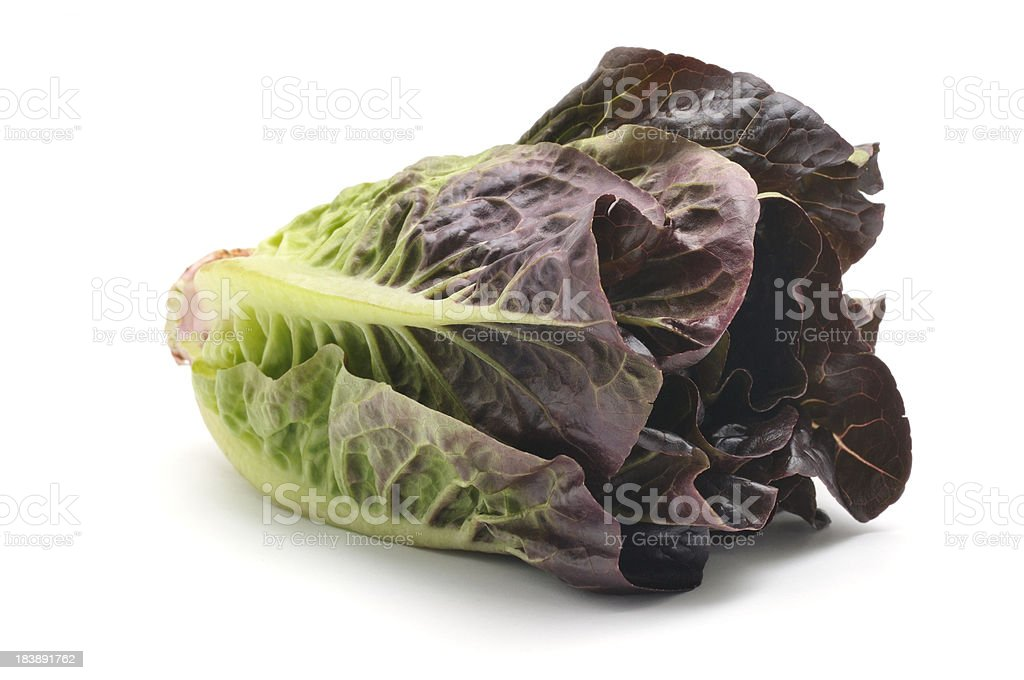 Cos Lettuce stock photo