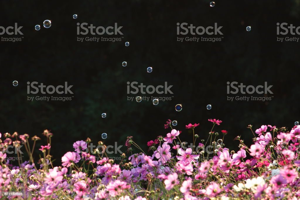 Cosmos and soap bubble Part 2 stock photo