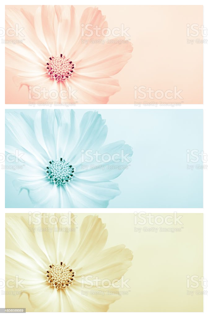 Cosmos flower  triptych series stock photo