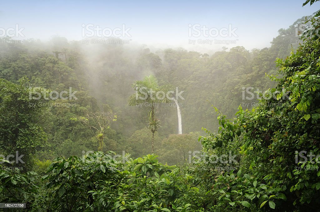 Costa Rica Rain Forest royalty-free stock photo