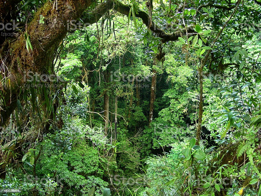 Costa Rica rainforest stock photo