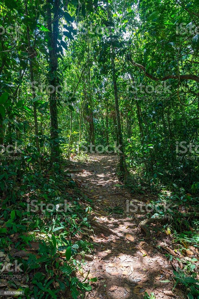 Costa Rica Trail stock photo