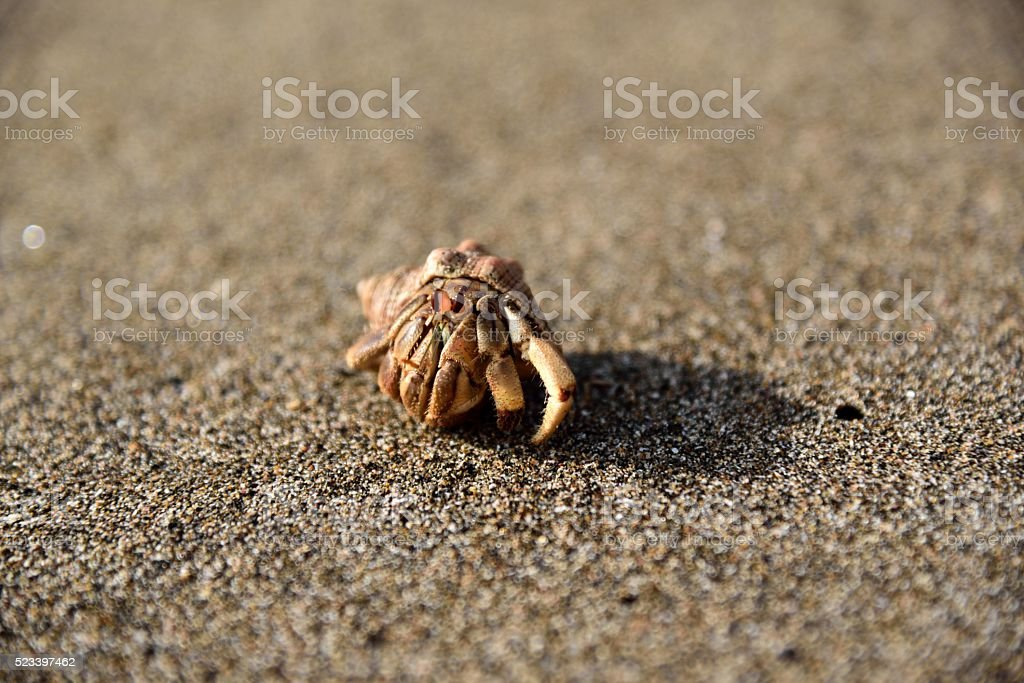 Costarican Hermit Crab stock photo