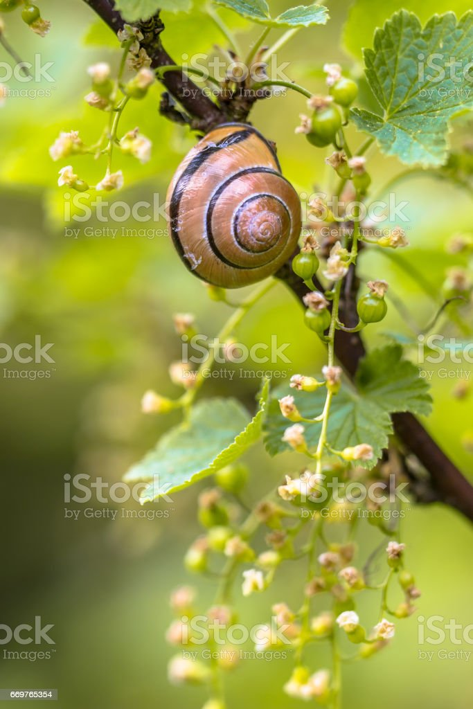 Cosy Garden scene with Grove snail stock photo
