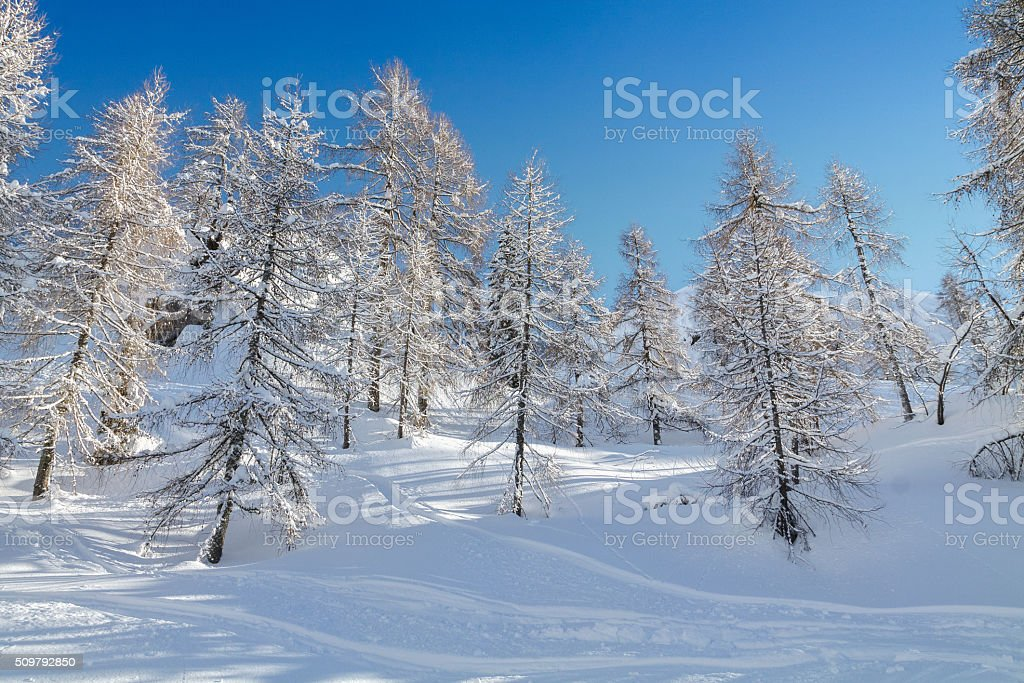 Cosy winter scene with snow covered trees in the mountains stock photo