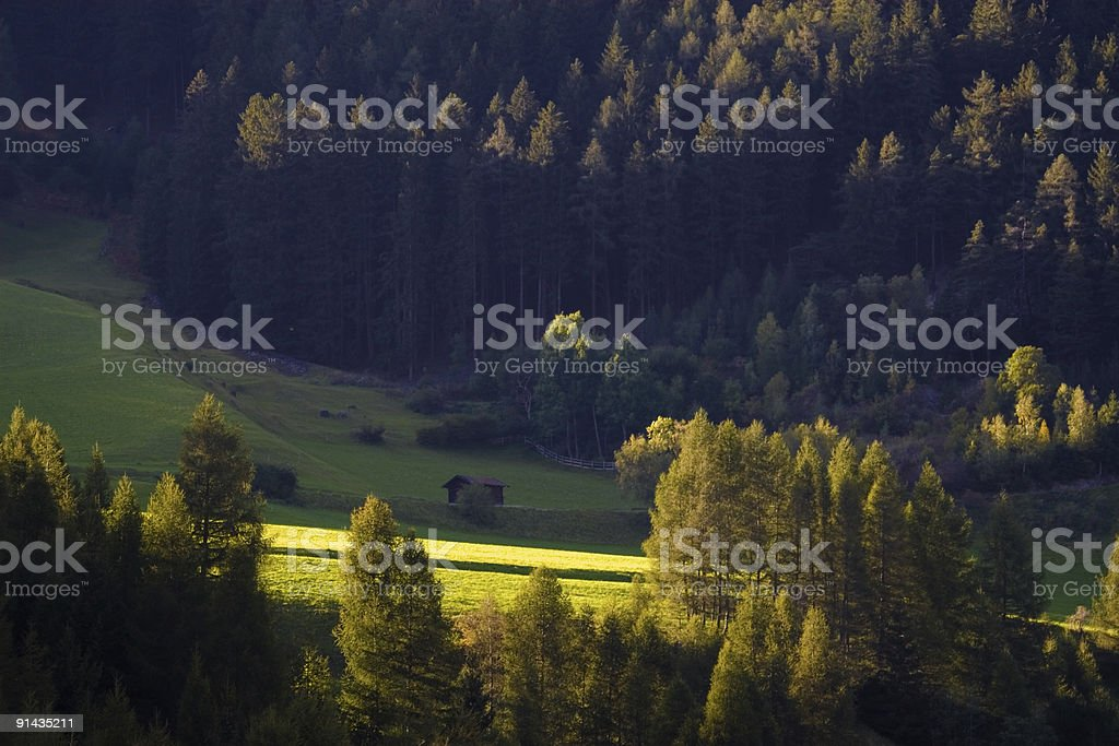 Cot near the wood royalty-free stock photo