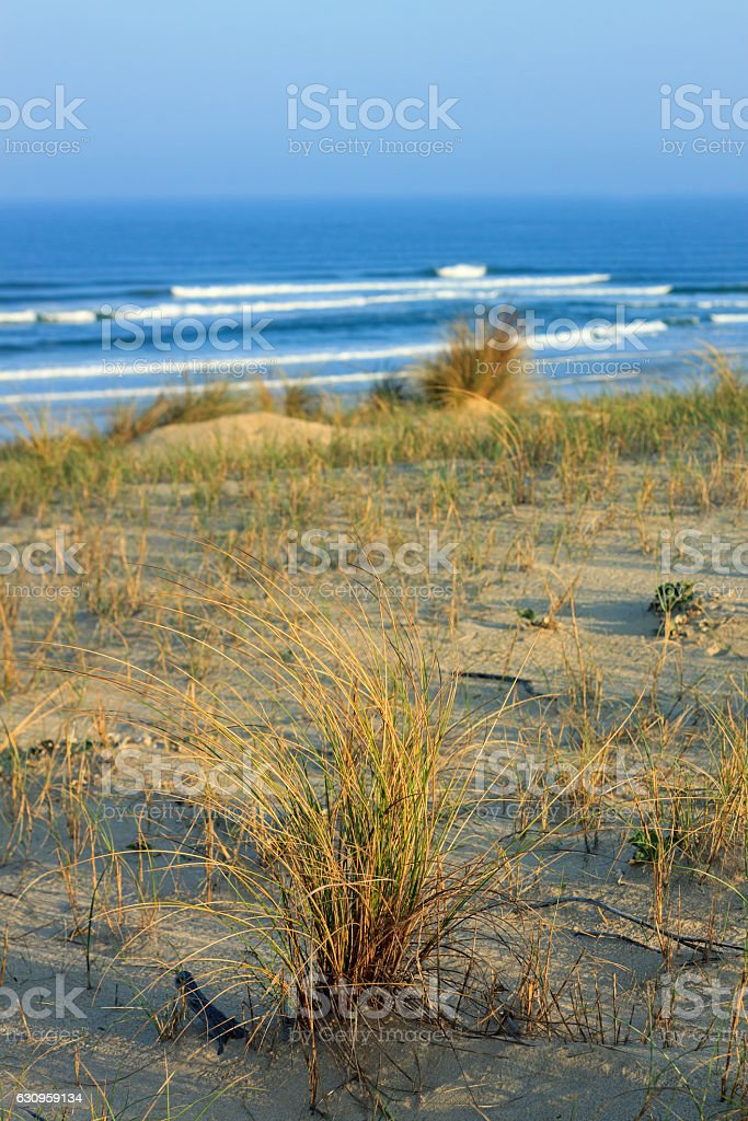 Cote d'Argent - Dunes with grasses, beach of Mimizan Plage stock photo