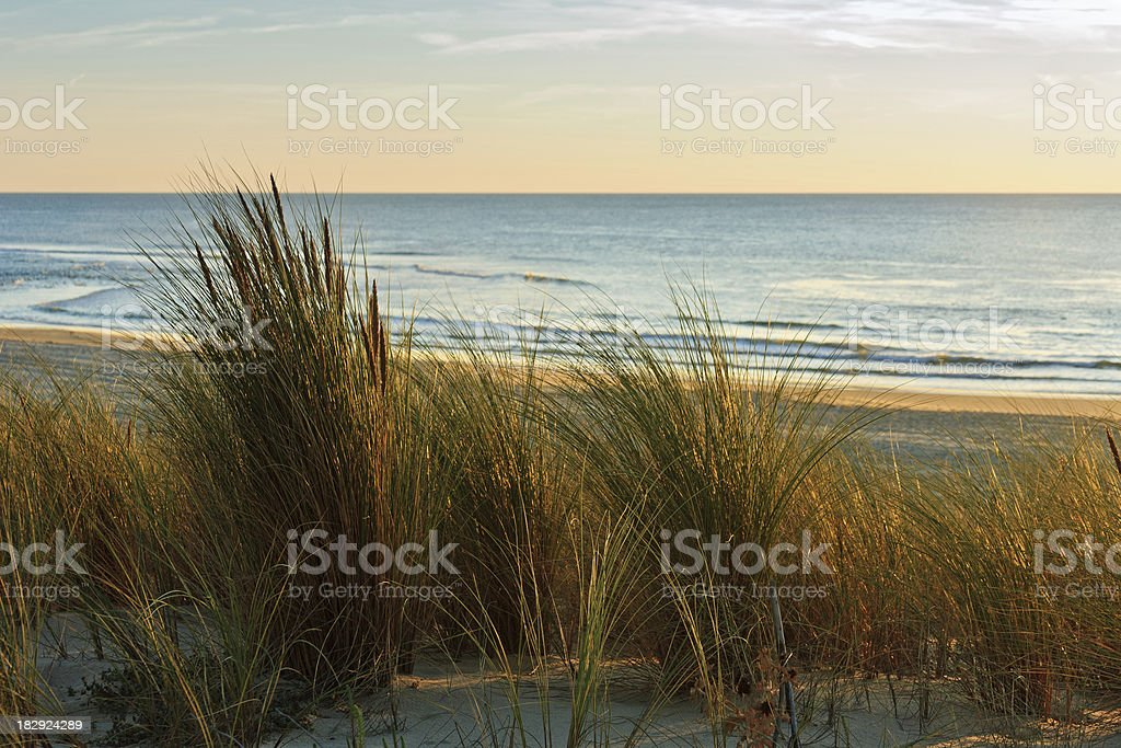 Cote d'Argent - Dunes with grasses in the evening sun stock photo