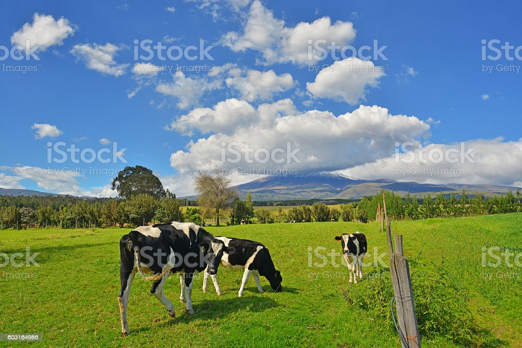 Cotopaxi Landscape stock photo